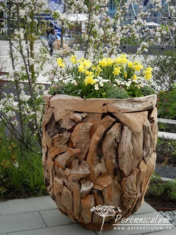 květináč ze starého vyplaveného dřeva, jarní cibuloviny