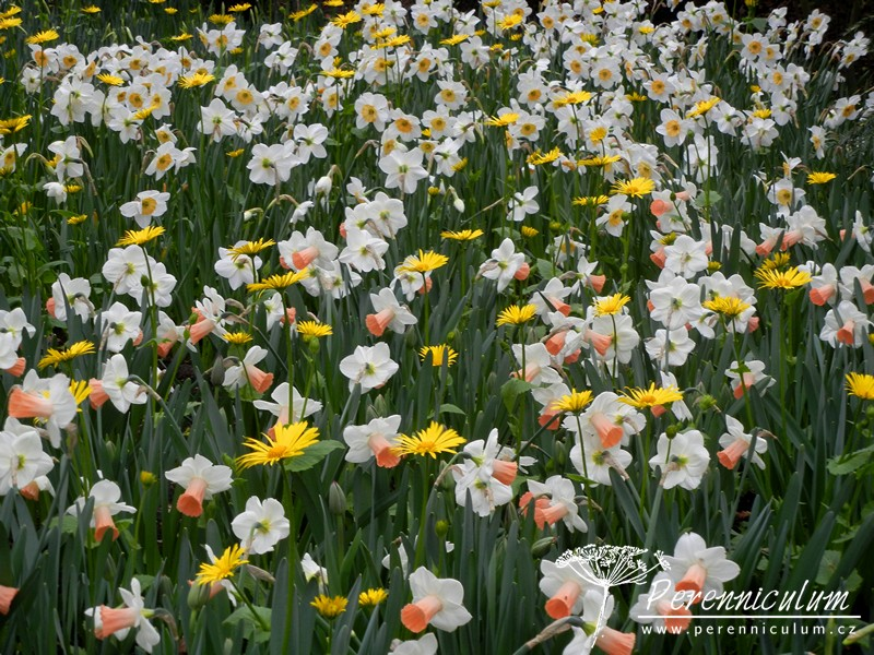 park Keukenhof, jaro, cibuloviny