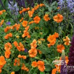 Geum Princes Juliana