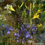 RHS Hampton Court Palace Flower Show_100