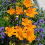 RHS Hampton Court Palace Flower Show_20