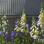 RHS Hampton Court Palace Flower Show_22