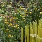 RHS Hampton Court Palace Flower Show_55