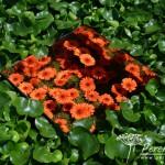 RHS Hampton Court Palace Flower Show_56