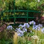RHS Hampton Court Palace Flower Show_68