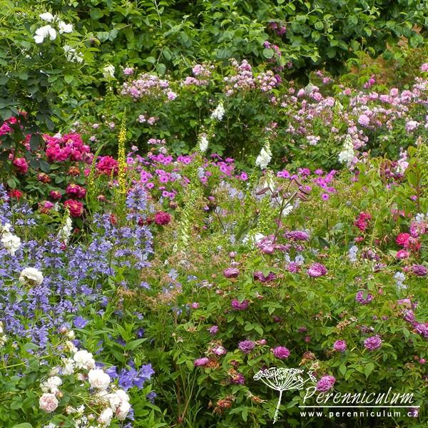 Trvalkovo-růžové království v Mottisfont Abbey Gardens hlavní obrázek