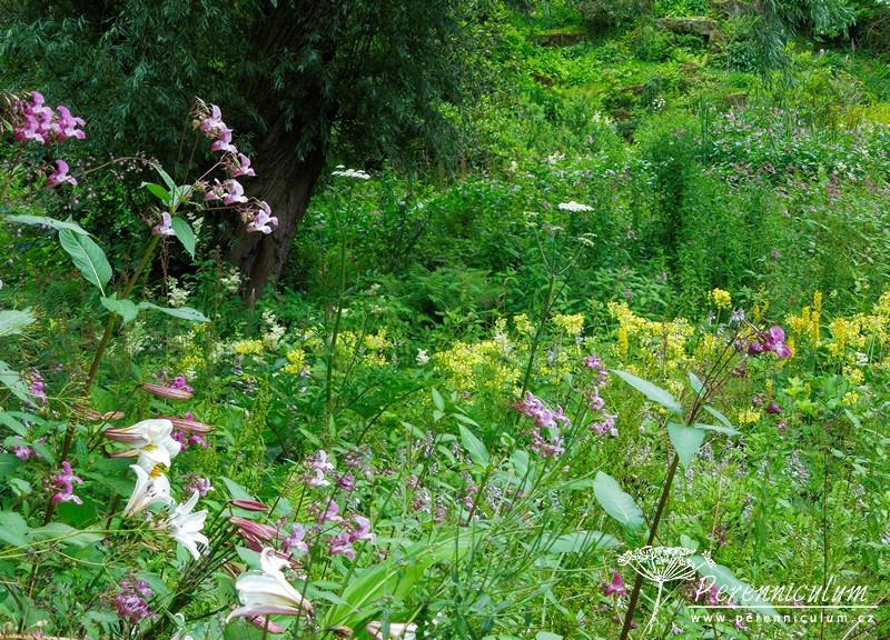 Himalájská zahrada imituje divokost tamní přírody, na jaře zde kvete mnoho rhododendronů, později pak petrklíče, divoké lilie a další.