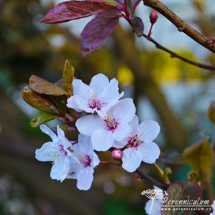 Veselé Velikonoce a barevné jarní dny