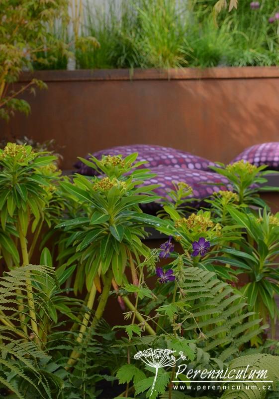 Limetkově zelená květenství pryšce (Euphorbia) kontrastují s tmavě fialovými potahy polštářků. Krásným detailem je téměř identicky fialová barva květů kakostu (Geranium phaeum 'Lily Lovell').