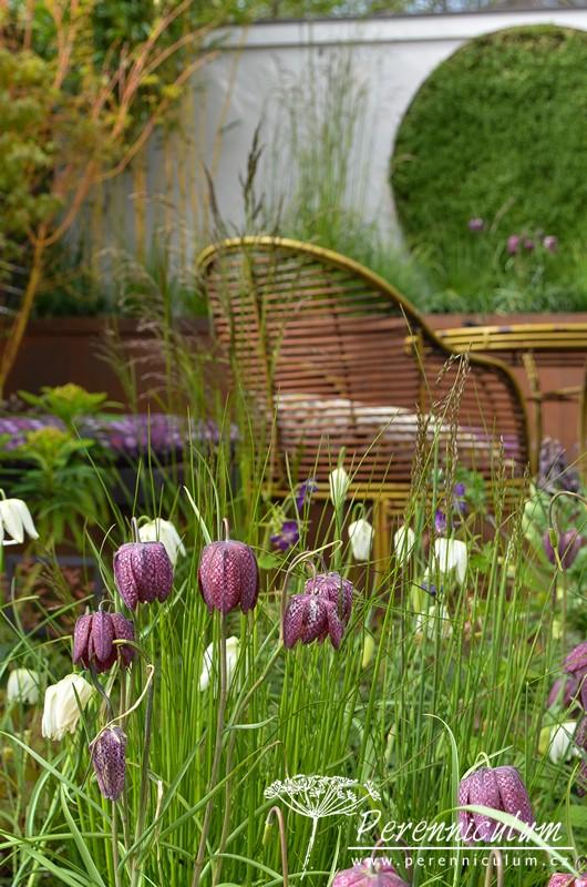 Výsadbám zahrady Alfresco Gallery Garden dominovaly řebříky, zde na fotografii Fritillaria meleagris a její bílokvětá forma var. alba.