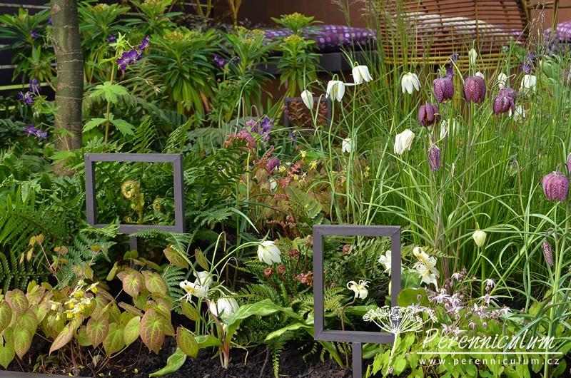 """Vtipně umístěné """"fotorámečky"""" pitahují pohledy návštěvníků k detailům stuktury rostlin - rozvíjející se spirála listu kapradiny či květ kandíku (<em>Erythronium californicum</em> 'White Beauty')."""