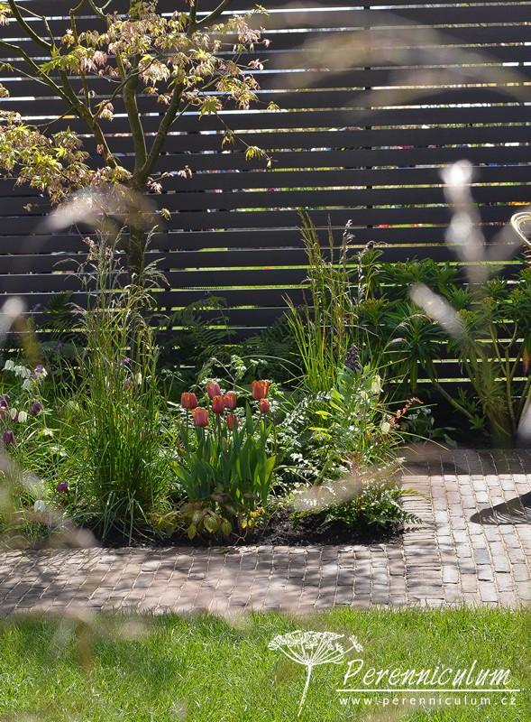 Cihlově zbarvený kultivar tulipánu (Tulipa) vynikal ve svěže zelených výsadbách a zároveň ladil s ostatními rezavě zbarvenými prvky.