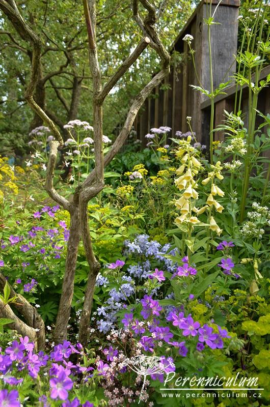 Pod roztodivně pokrouceným keřem kvete fialový kakost (Geranium), bílá mavuň (Centranthus) nebo žlutý náprstník (Digitali lutea).