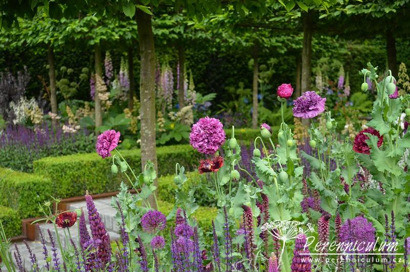 Rozmanitým, barevně sladěným výsadbám dává rámec střihaný živý plot z buxusu i špalírově střihané koruny habrů (<em>Carpinus</em>).