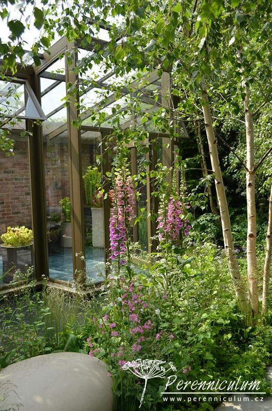 """The Hartley Botanic Garden, zahradní architektka Catherine MacDonald navrhla březový háj plný náprstníků (Digitalis) okolo proskleného altánku """"plovoucího"""" na vodní hladině."""