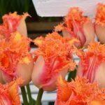 Tulipa Ballroom