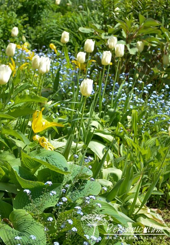 Zahrady Rosemary Verey - Barnsley House
