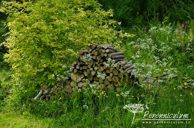 Dřevo z pokácených stromů ponechané asi pro broučky.