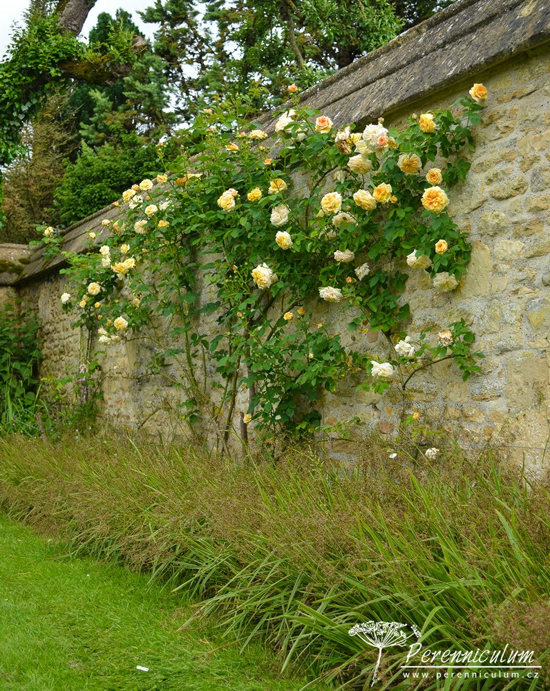 Hazelbury Manor Gardens_06
