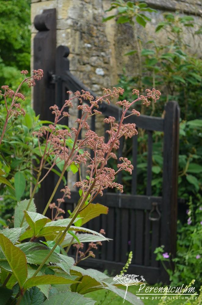 Různé typy vrátek a průchodů dávali zahradnímu designu krásný detail. Zde v kombinaci s rodgerzií (Rodgersia).