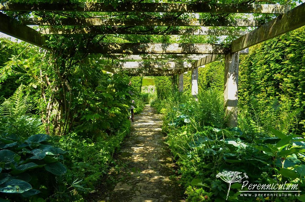 Slunný záhon opět vystřídá stinné zákoutí, tentokráte tvořené robustní dřevěnou pergolou, porostlou, jak jinak než růžemi (ramblery). Ve stínu pod nimi rostou bohyšky (<em>Hosta</em>) a kapradiny. Zahrada komponovaná jako symfonie, oči se zklidní, vše je zelené, tmavé...