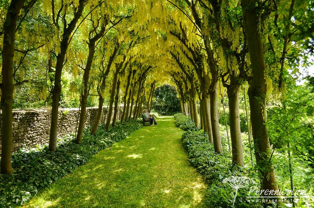 A pak přijde zlaté překvapení. Štědřencový tunel (<em>Laburnum</em>), z nějž při sebemenším vánku prší zlaté okvětní plátky.