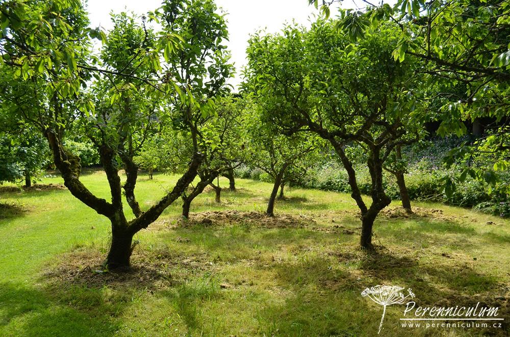 V zahradě nechybí ani starý ovocný sad.