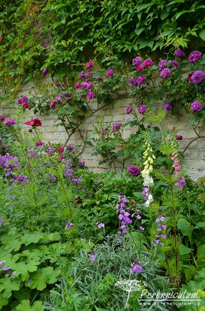V tuto roční dobu zrovna kvetly růže (Rosa), náprastníky (Digitalis) či šanta (Nepeta).
