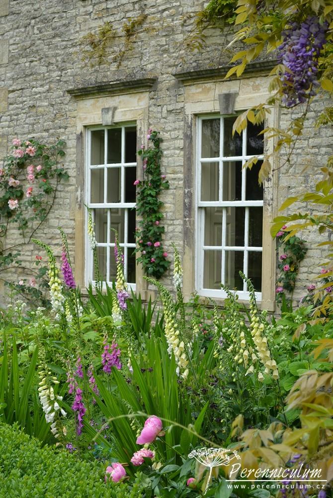 Pod okny kvetou náprstníky Digitalis purpurea, na stěně se pak pne vistárie (Wisteria) či pnoucí růže (Rosa).