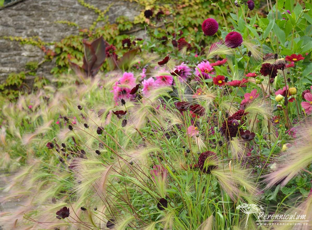 Všechny použité letničky ladí do purpurových či růžových tónů - krásenky (<em>Cosmos</em>), jiřiny (<em>Dahlia</em>) či sporýš (<em>Verbena</em>).
