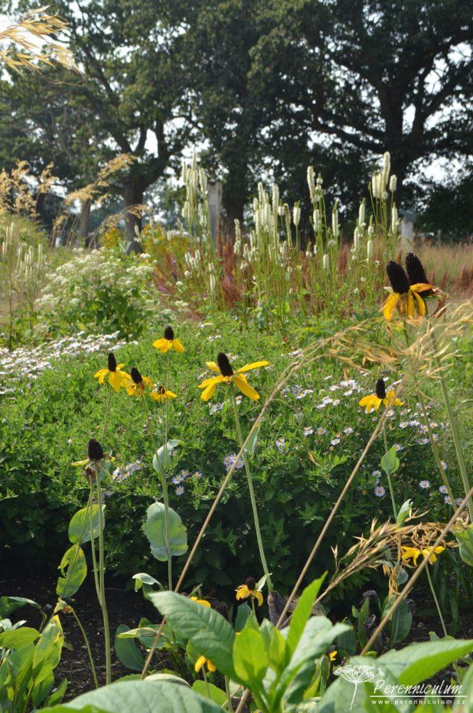 Třapatky (Rudbeckia), krvavce (Sanguisorba) a okrasné trávy dominují prériovým záhonům.