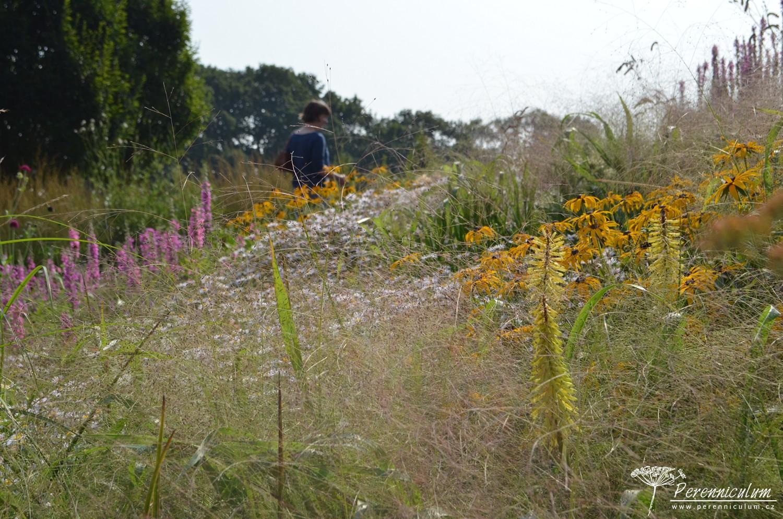 Pohled z útrob záhonu přes jemné rozevláté okrasné trávy a pastelově zbarvené trvalky.