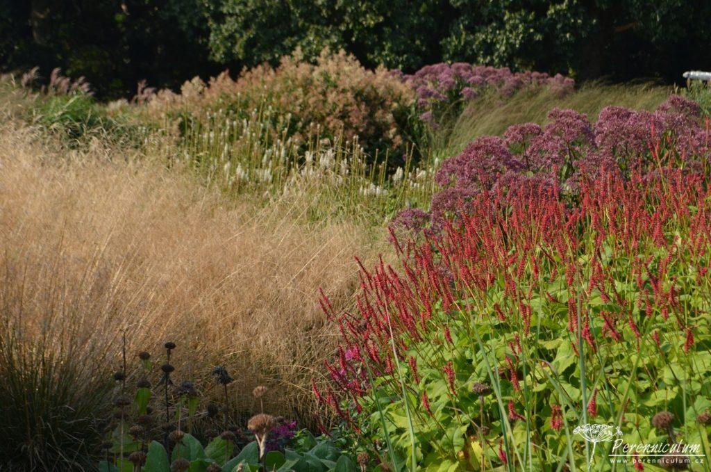 Tóny podzimu rezonují trvalkovým záhonem. Vpředu tmavě karmínové rdesno (Persicaria amplexicaulis 'Dikke Floskes').