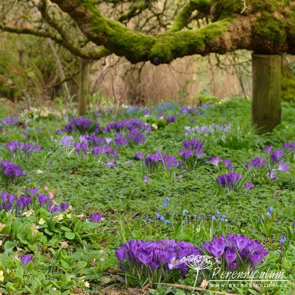 Dvojí jaro hlavní obrázek
