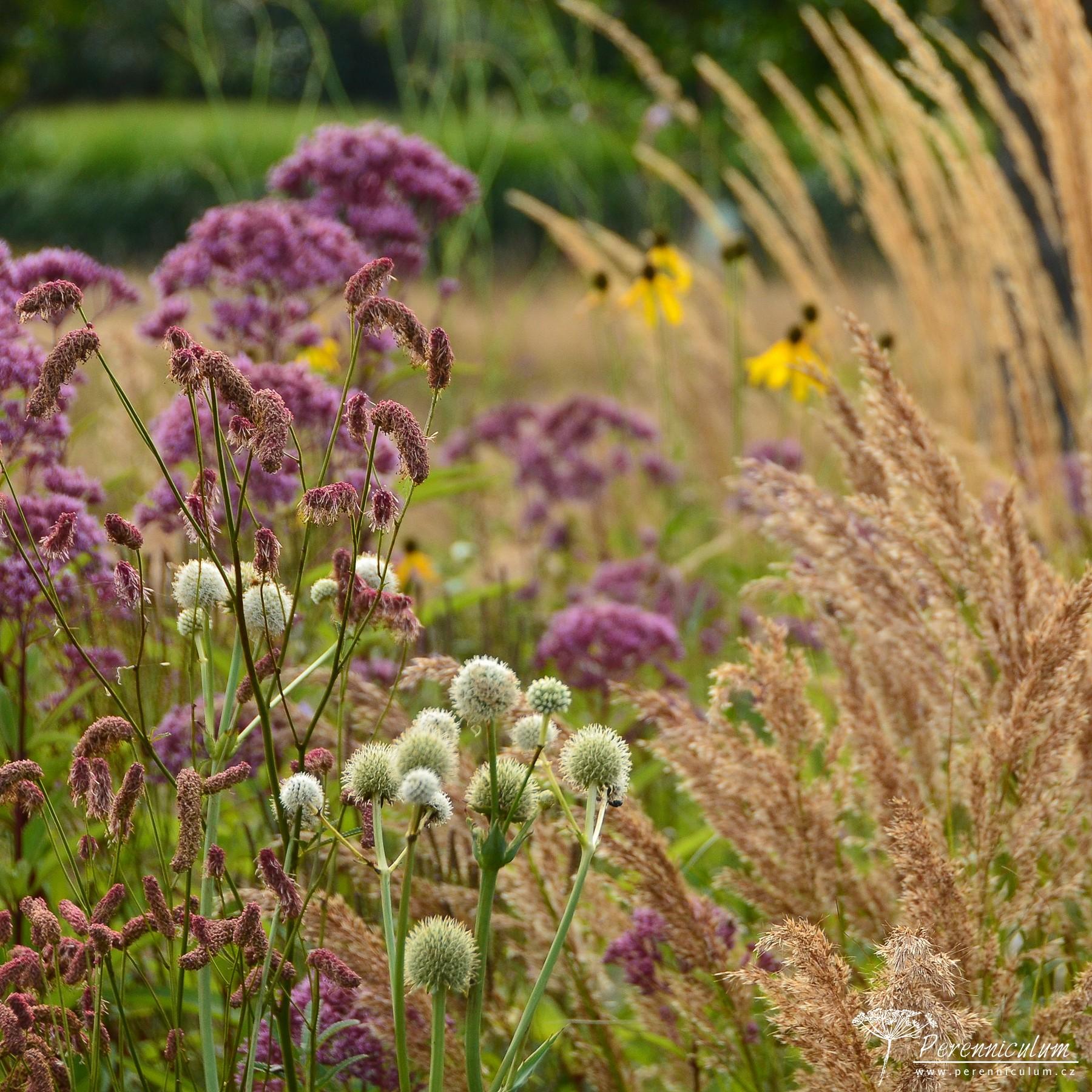 Le Jardin Plume – venkovské kouzlo s podtónem francouzské formální zahrady hlavní obrázek