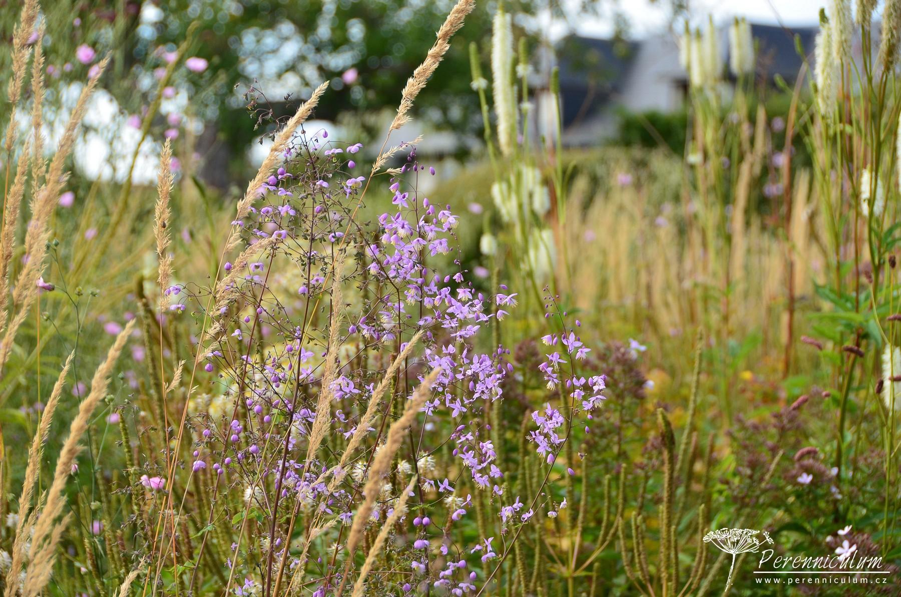 Ve větru se třepotají okrasné trávy, žluťuchy (Thalictrum) a v pozadí krvavce (Sanguisorba) či rozrazilovce (Veronicastrum).