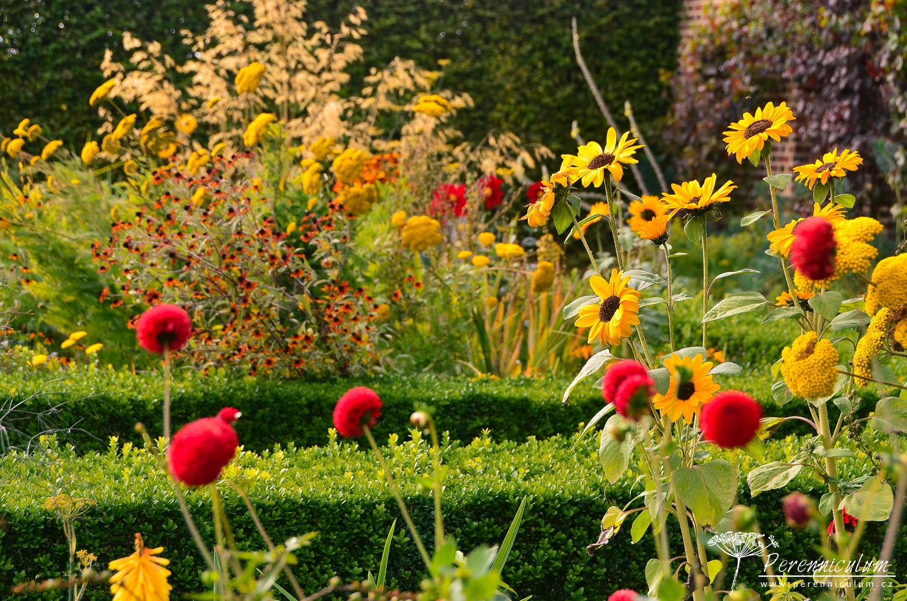 Červené jiřiny (Dahlia) a žluté slunečnice (Helianthus).