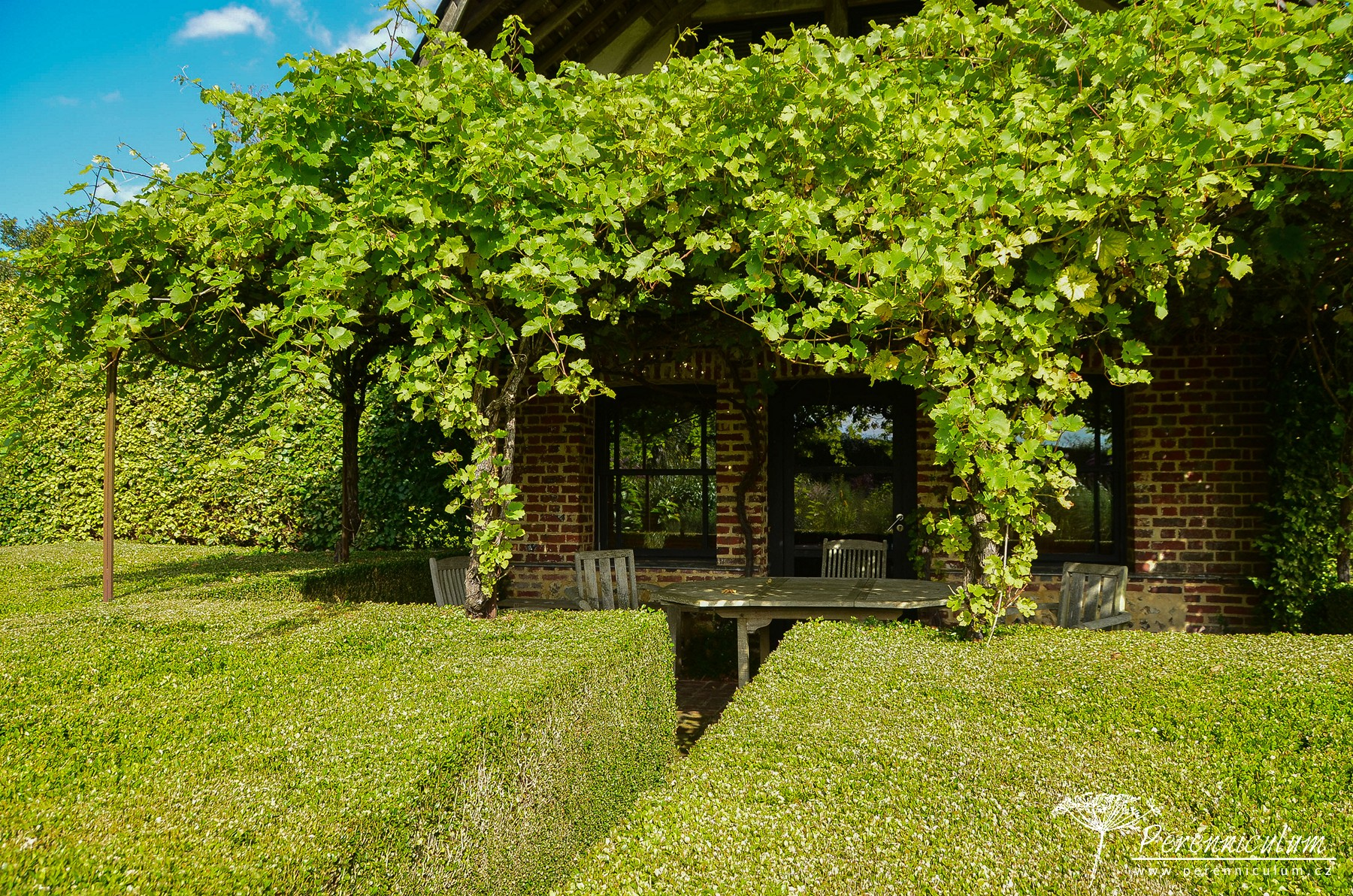 Na západní straně domu je posezení s pergolou, kterou popíná vinná réva a obklopuje velký blok stříhaného buxusu.