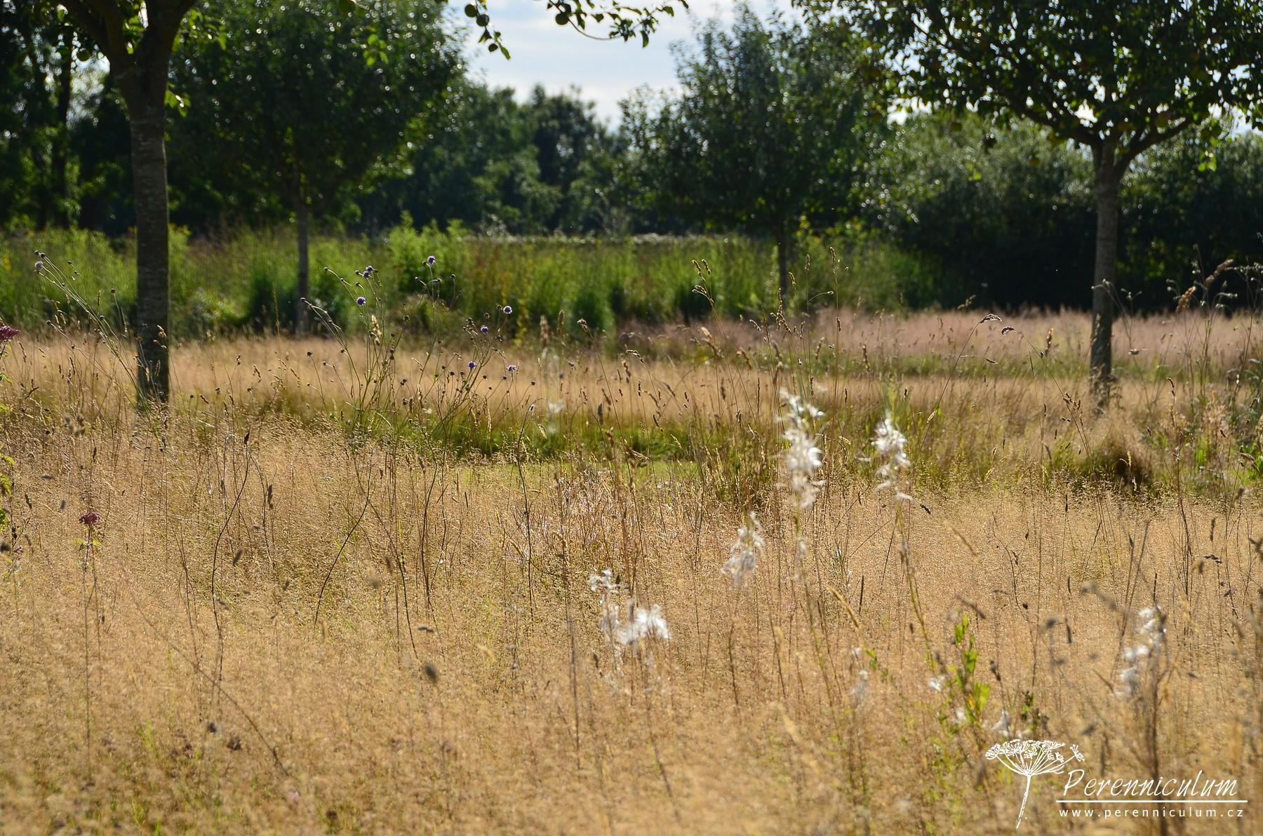 Koncem léta zde dominují okrasné trávy s občasně kvetoucími trvalkami jako Succisa pratensis.