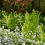 Allium ursinum, pomněnky a kapradiny