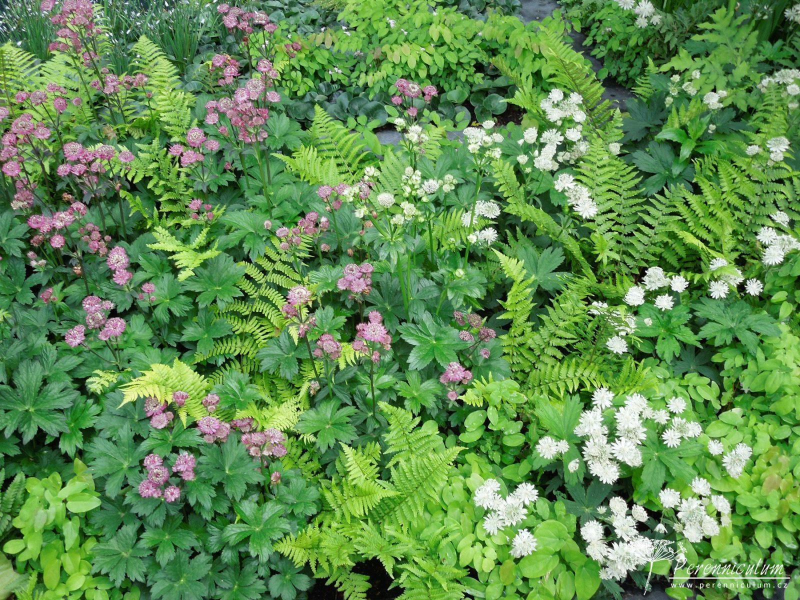 Polostinná tapiserie textur kapradin, listů a květů jarmanek.