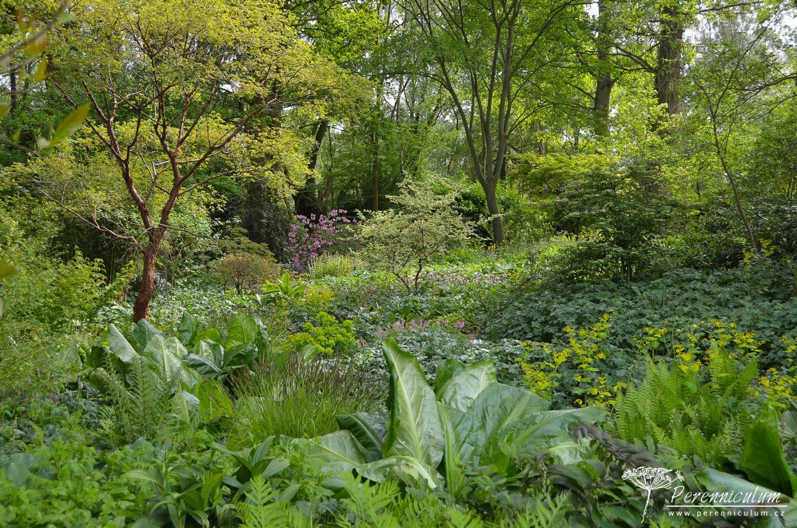 Šťavnatě zelená, hustě osázená, avšak pečlivě, zahradnicky udržovaná hajní partie.