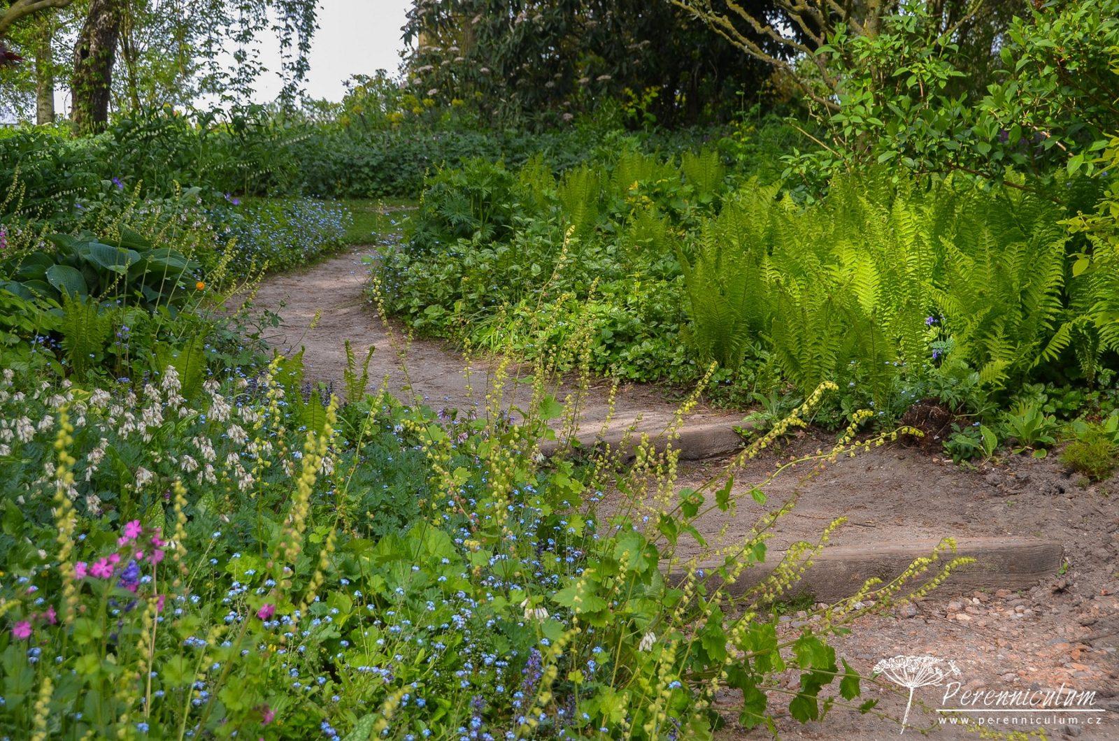 Mírný kopeček překonávají přírodní dřevěné schody, které lemuje směs trvalek do polostínu: Tellima grandiflora, Myosotis sylvatica, Dicentra formosa 'Aurora' nebo Matteucia struthiopteris.