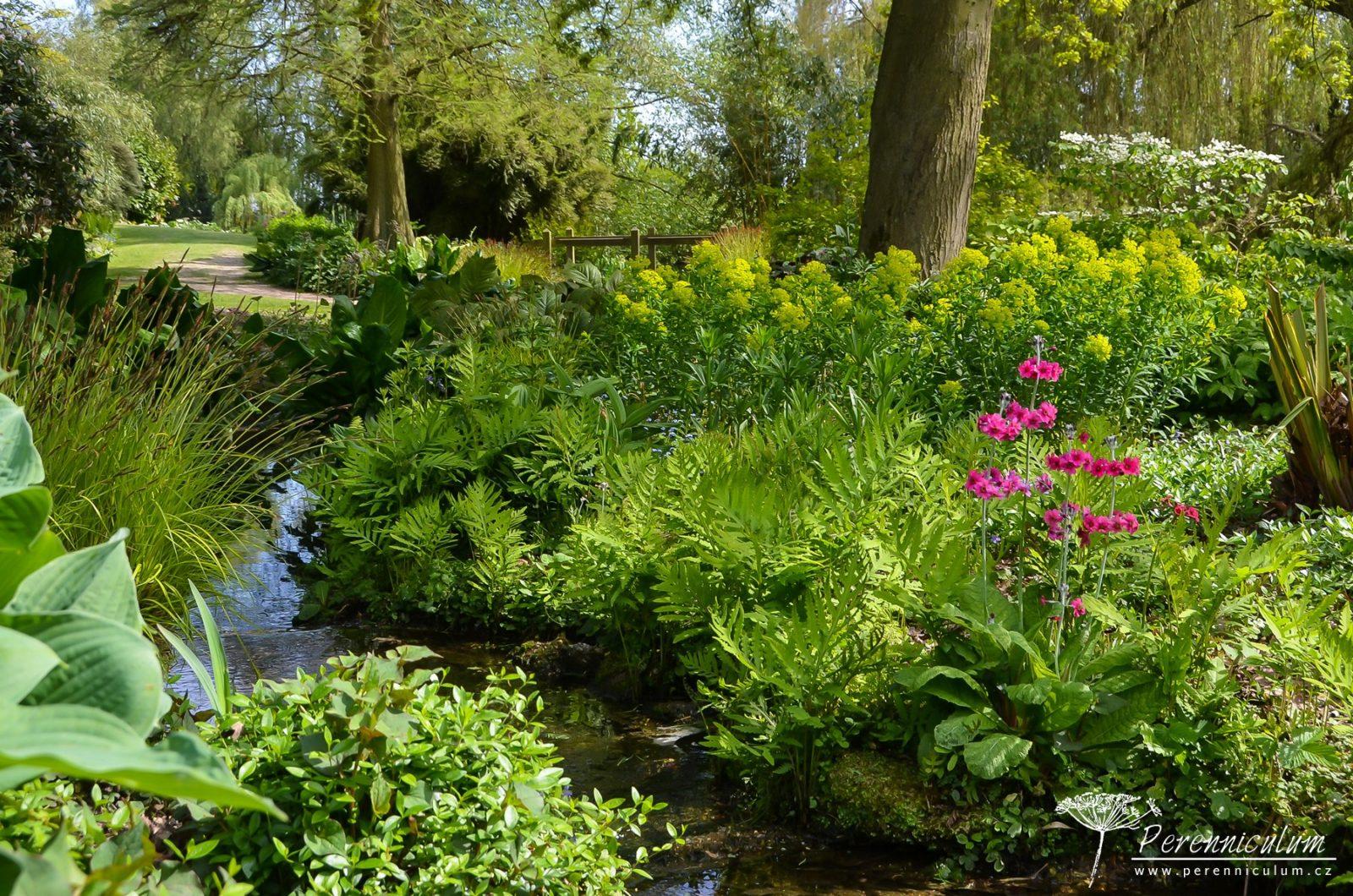 Podél potůčku kvetly patrovité petrklíše (<em>Primula pulverulenta</em>) doplňované kapradinami (<em>Onoclea sensibilis</em>) či kvetoucím pryšcem (<em>Euphorbia</em>).