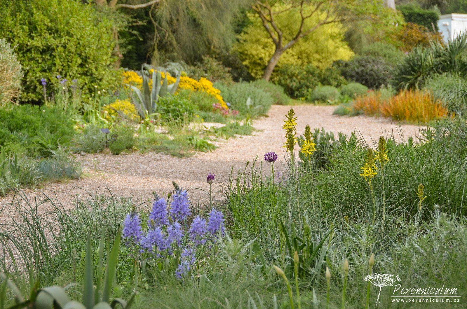 V květnu se Štěrková zahrada teprve probouzela kvetla asfodelka žlutá (<em>Asphodeline lutea</em>), okrasné česneky (<em>Allium</em>) a nebo modré <em>Camassia</em>.
